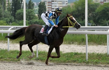 Pyatigorsk City Stakes (Russian Group III)