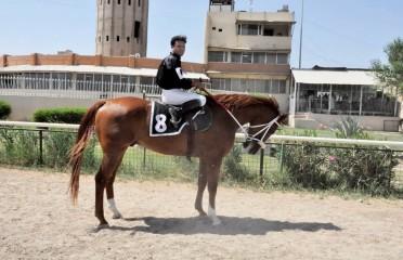 Arabian Purebred Race