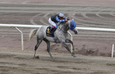PRESIDENT OF THE UAE CUP (LISTED PA)
