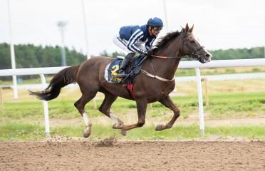 Arabian Handicap Race